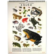 CHG-0297-Illustrated-Order-of-the-Animals_inside1