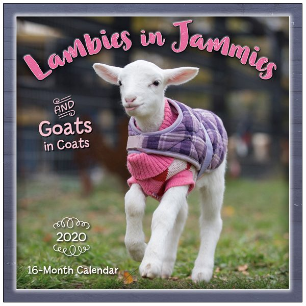 Lambies In Jammies 2020 Wall Calendar