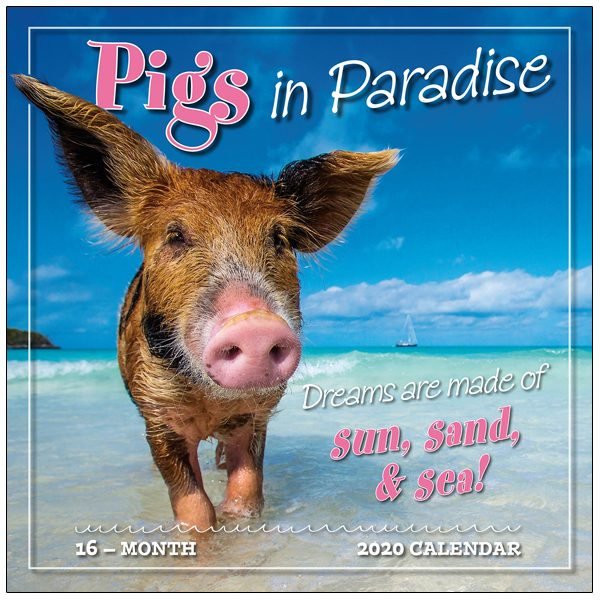 Pigs in Paradise 2020 Wall Calendar